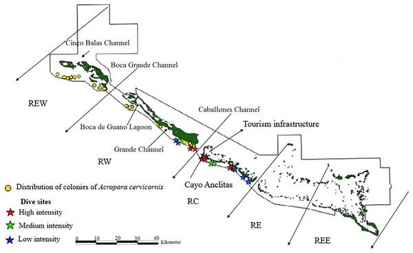 Distribution of live colonies of Acropora cervicornis in Jardines de la Reina National Park, Cuba.