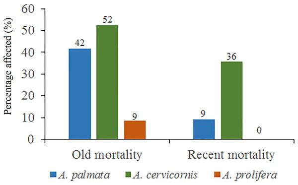Percentage of old mortality and recent mortality in colonies of Acropora palmata, Acropora cervicornis and Acropora prolifera in Jardines de la Reina National Park, Cuba.