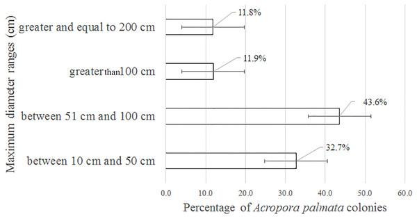 Maximum diameter ranges in Acropora palmata colonies in Jardines de la Reina National Park, Cuba.