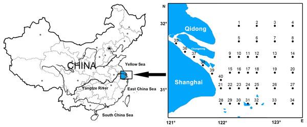 Location of survey stations of ichthyoplankton in Yangtze estuary.