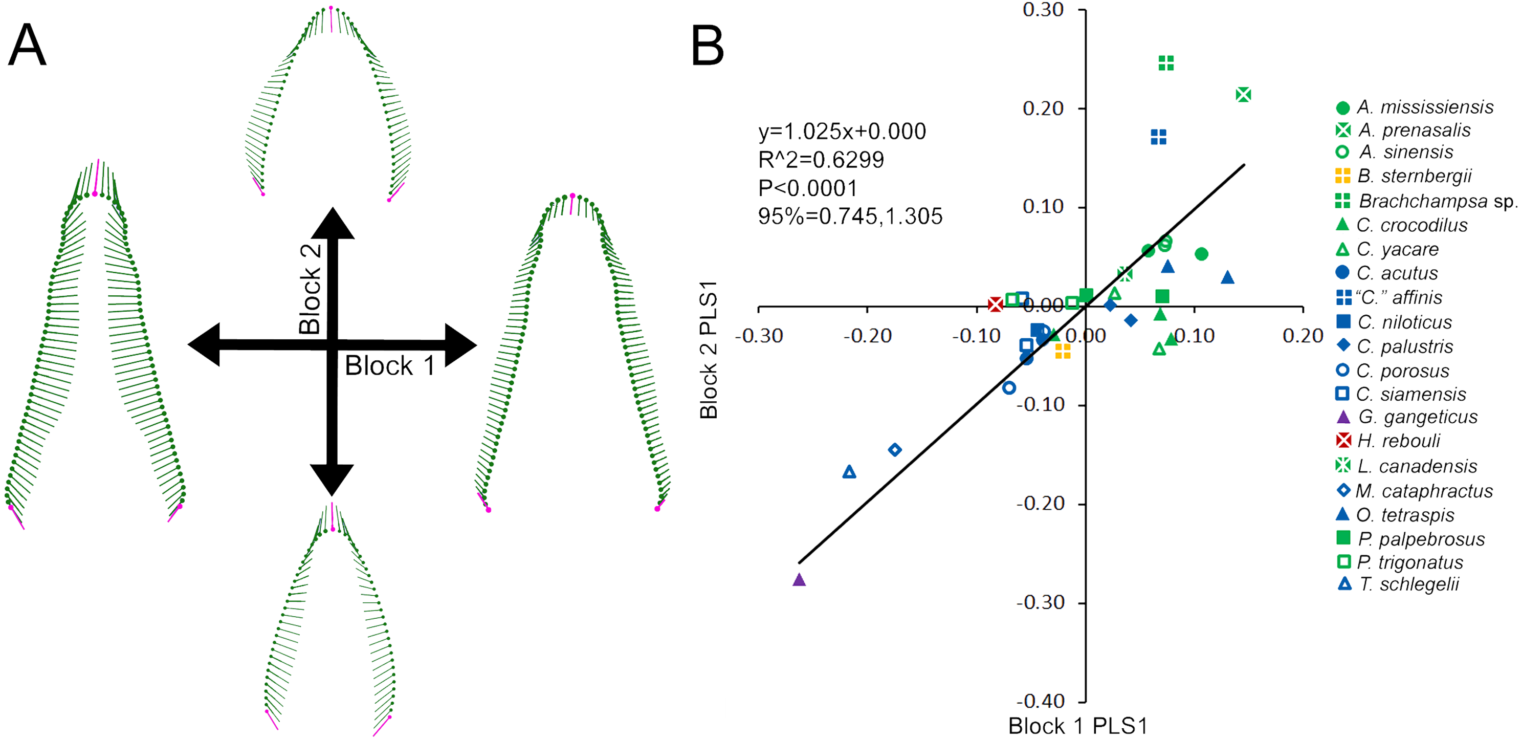 Quantitative heterodonty in Crocodylia: assessing size and shape