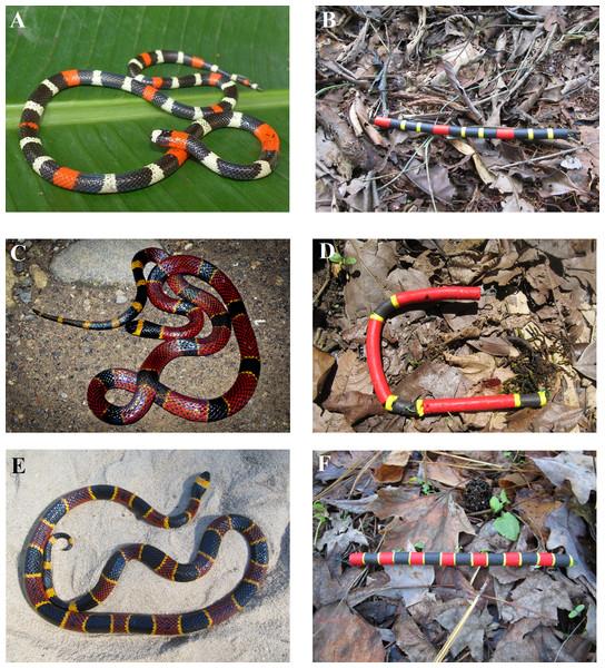 Study snake species.