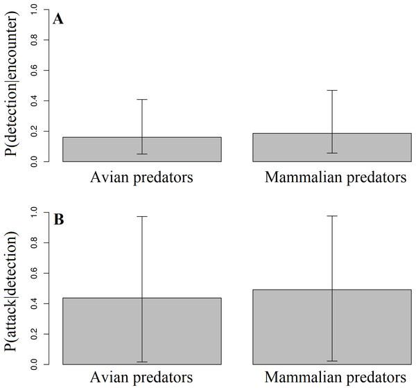 Detection and attack probabilities of avian vs. mammalian predators.
