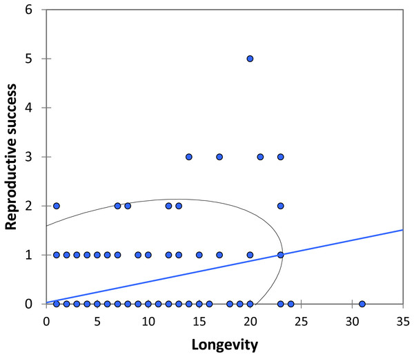 The relationship between longevity and reproductive success (number of matings) for BW males of P. zoe.