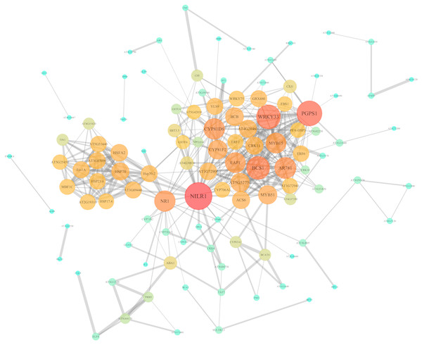 PPI network of identified DEGs constructed by the STRING database.