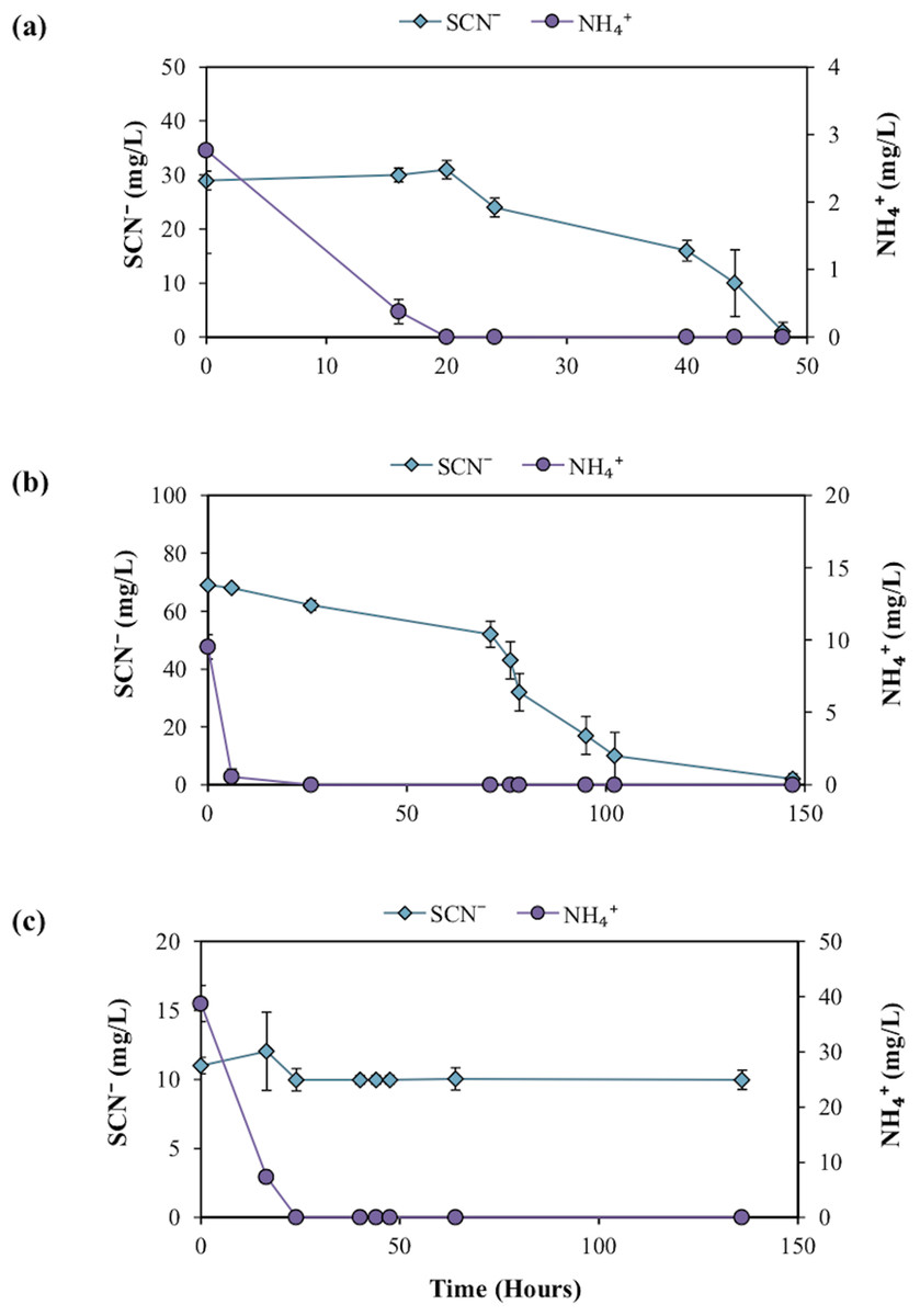 Biodegradation of thiocyanate by a native groundwater
