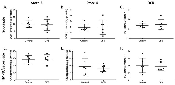 State 3 respiration, state 4 respiration, and RCR in control and CFS permeabilised myotubes.