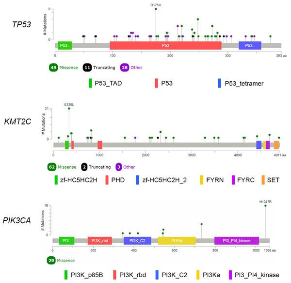 Mutational spectrum of TP53, KMT2C and PIK3CA in TNBC.