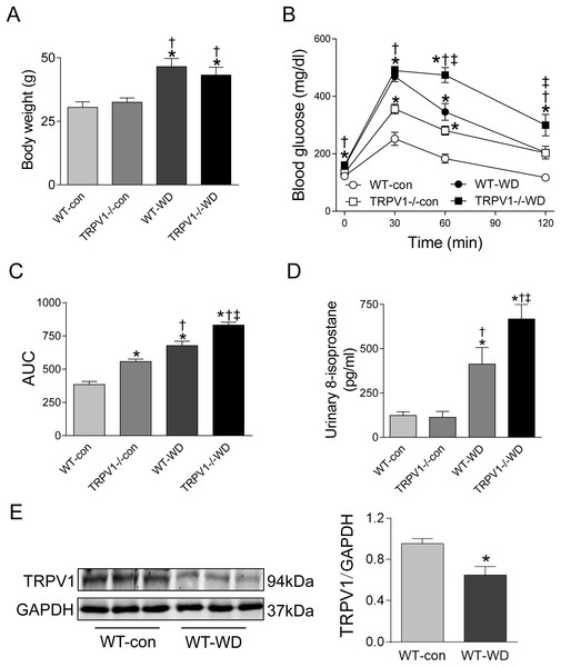 Body weight, glucose tolerance, oxidative stress, and TRPV1 expression.