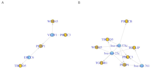 Network representation of transcription factor/microRNA targets.