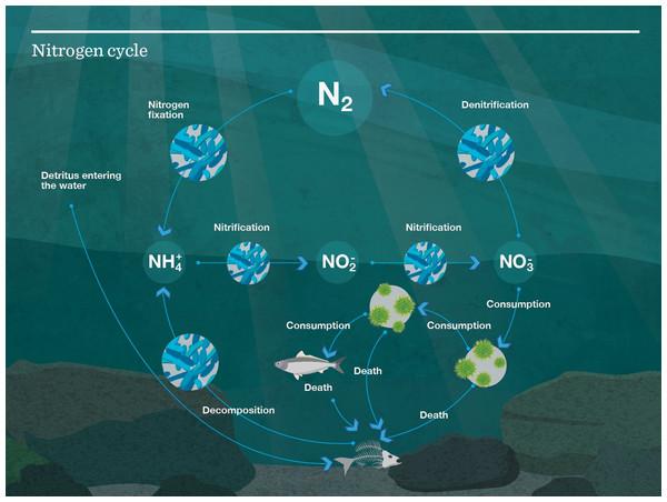 Nutrient cycle as modelled in Atlantis.