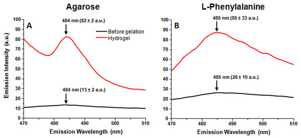 One percent agarose and 300 mM Phe gel formation induced ThT fluorescence emission changes (sample excitation wavelength – 440 nm).