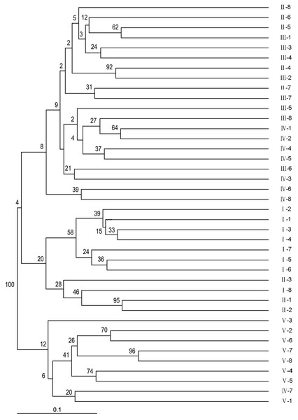 Phylogenic relationships among the 40 wild sainfoin individuals. The phylogeny tree was constructed using a neighbor-joining dendrogram in the Darwin software.