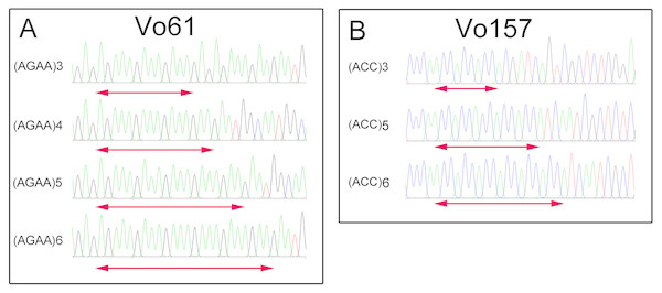 Comparative analysis of the DNA fragment peak spectrum for two selected EST-SSR loci among the same unit of Onobrychis viciifolia.