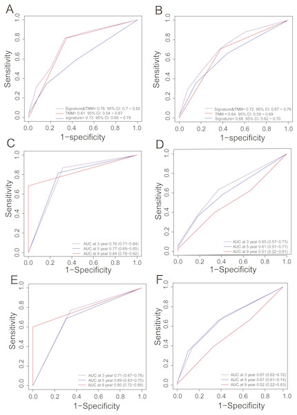 ROC analysis for comparing survival prediction power between the PCG signature and TNM stage in the training (A) and entire dataset (B) and time-dependent ROC analysis of the signature and TNM stage in the training (C, D) and entire dataset (E, F).