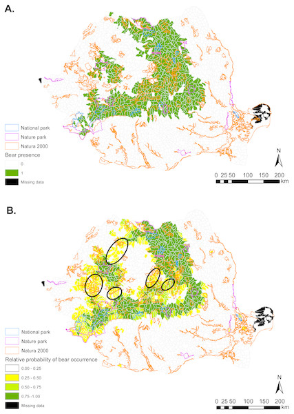 (A) Brown bear presence (1) and absence (0) based on footprint tracking in 2011 at the level of Romania's WMUs. (B) Predicted relative probabilities of brown bear occurrence based on top habitat model.