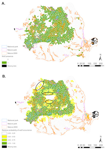 (A) Gray wolf presence (1) and absence (0) based on footprint tracking in 2011 at the level of Romania's WMUs. (B) Predicted relative probabilities of gray wolf occurrence based on top habitat model.