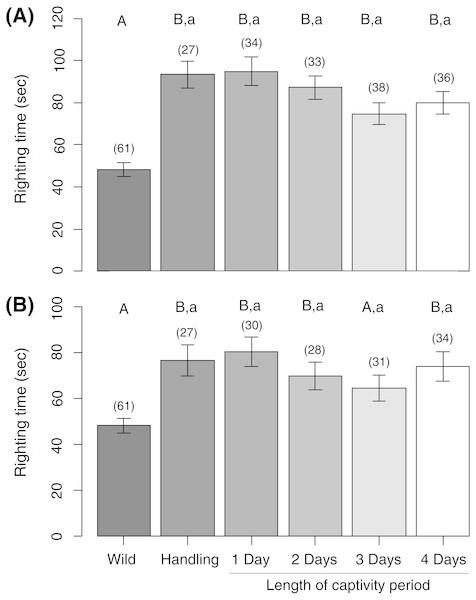 Sea urchin righting times measured (A) immediately after release into the wild and (B) 24 h post-release.