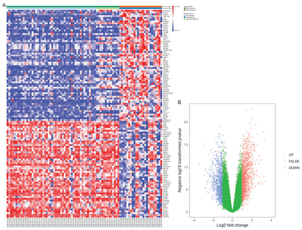 Differentially expressed gene expression heatmap and volcano plot of glioma.