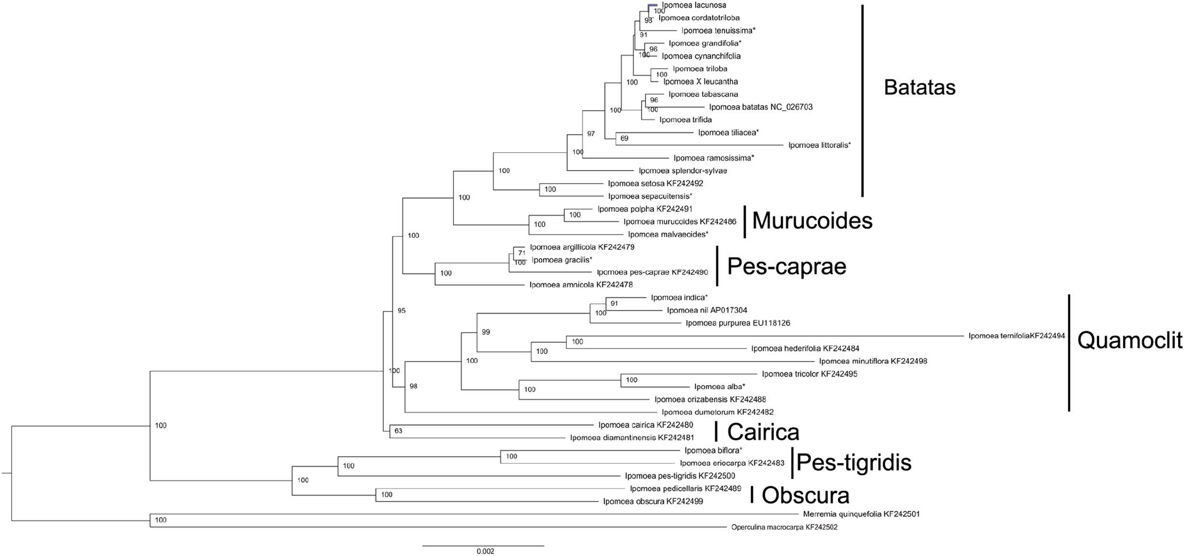 A systematic comparison of eight new plastome sequences from