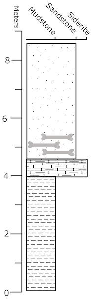 "Stratigraphic column of the ""Constantine"" Quarry."