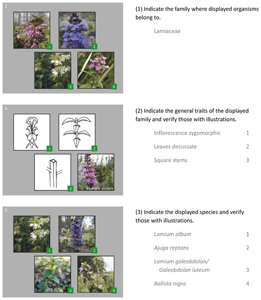 Example of a question cluster from the questionnaire for one plant family.
