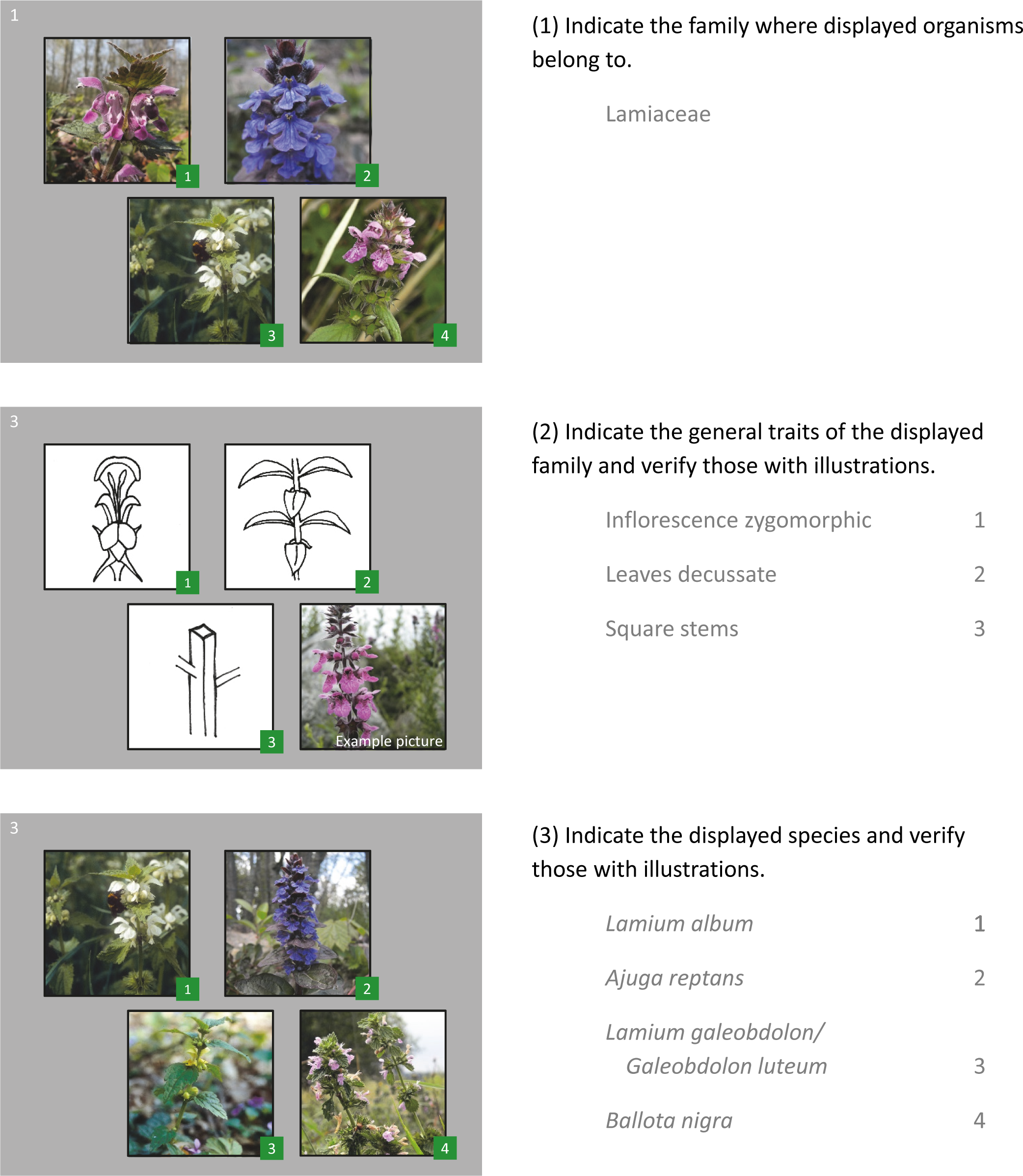 Just a small bunch of flowers: the botanical knowledge of