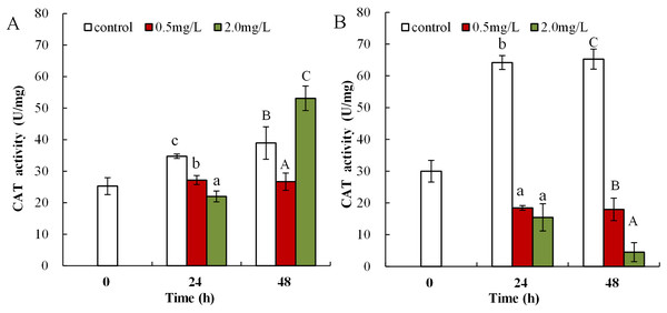DBP induced changes in CAT activity in D. magna.