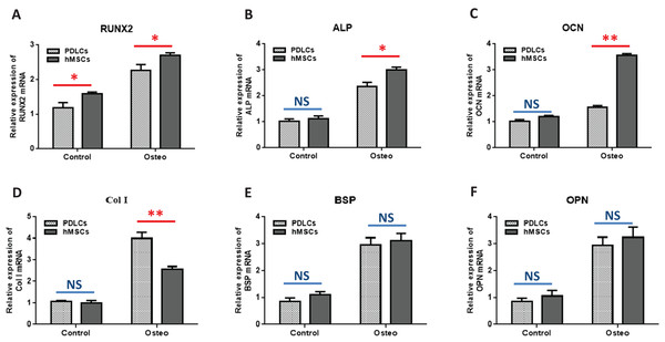 Osteogenic marker genes expression in PDLCs and hMSCs after 14 days of osteo-inductive incubation in vitro.