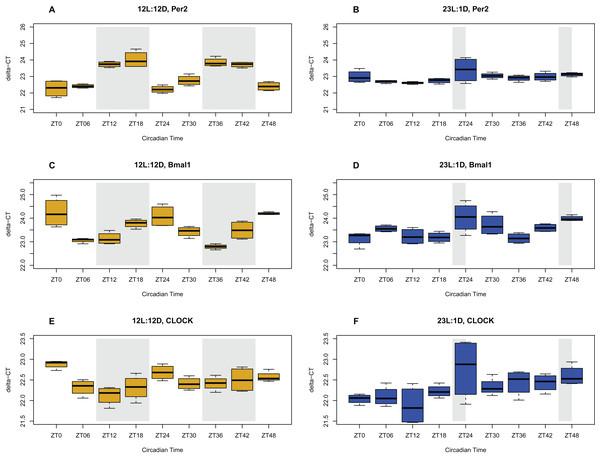 Circadian gene expression profiles in the brain.