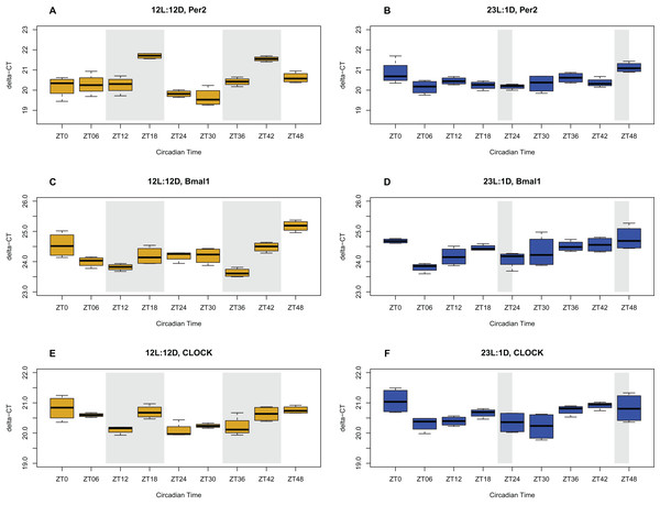 Circadian gene expression profiles in the ceca.