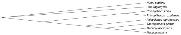 Phylogenetic relationship of similar ERVs.
