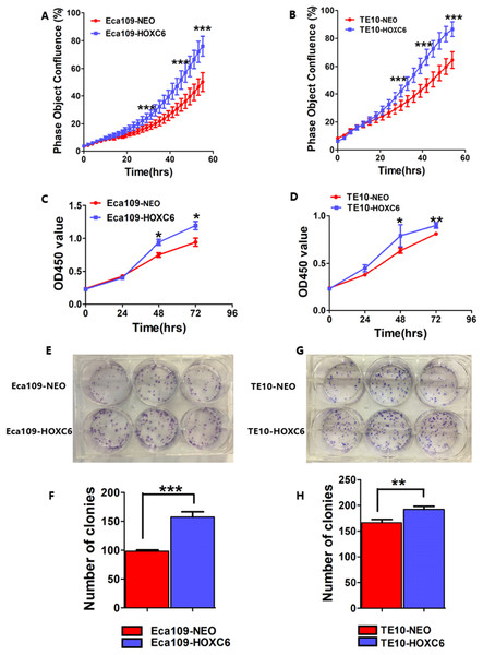 HOXC6 promoted ESCC cell proliferation.
