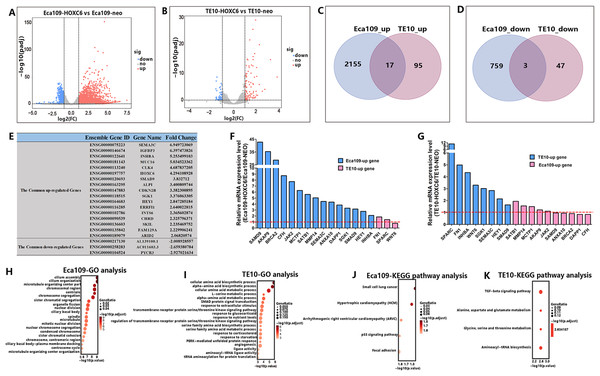 RNA-seq analysis of the interactive genes of HOXC6 in Eca109 and TE10 stable cells.