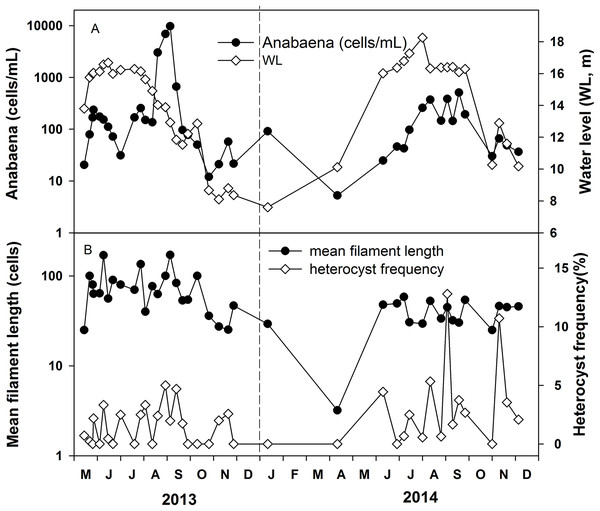 Variations of Anabaena abundance and Anabaena heterocyst frequency in the years 2013 and 2014.