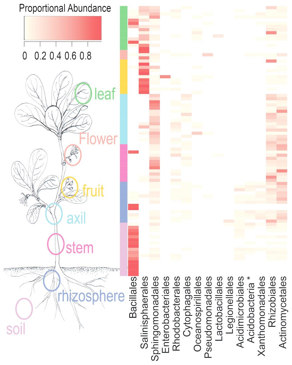 Phytobiomes are compositionally nested from the ground up