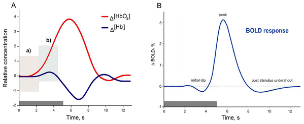 Examples of canonical hemodynamic response (A), and hemodynamic response function (B).