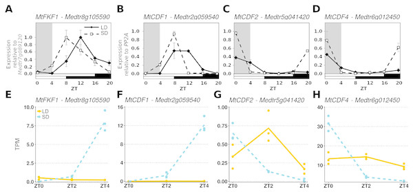 Comparing RT-qPCR and RNA-Seq results from independent experiments to validate combining the RNA-Seq datasets.