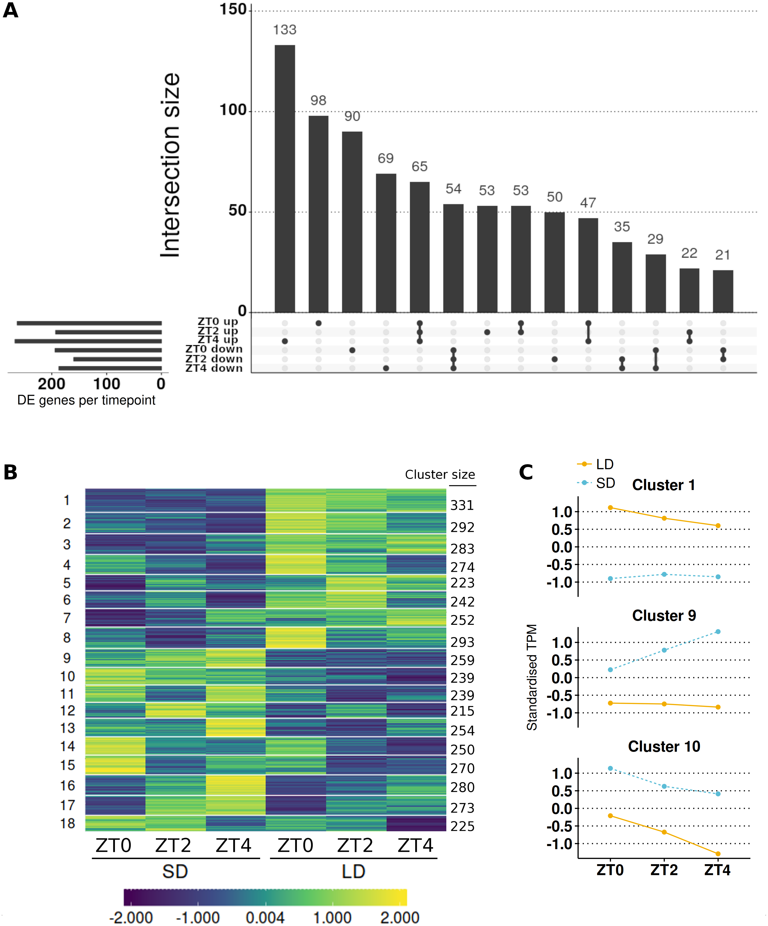 The transcriptomic response to a short day to long day shift in