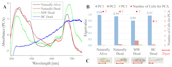 Principal component analysis (PCA) of absorption spectra of E.  gracilis in CM medium.
