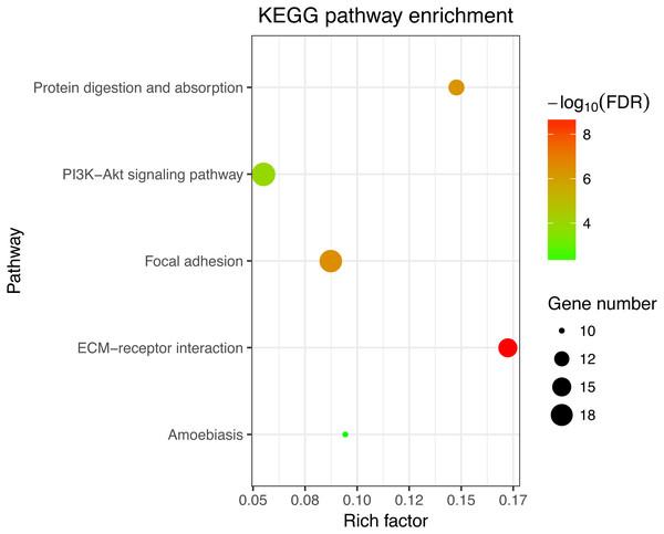 KEGG enrichment analyses of 158 common DEGs.