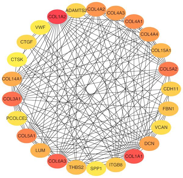 Top 25 hub gene network.