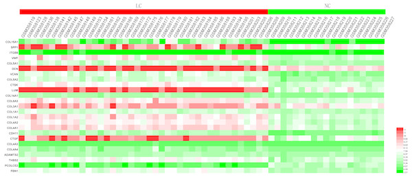 Heatmap of the expression of the 25 hub genes in the GSE14323 validation dataset.