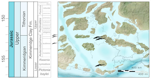 Stratigraphic and palaeogeographic distribution of Late Jurassic (Kimmeridgian—early Tithonian) Bathysuchus megarhinus