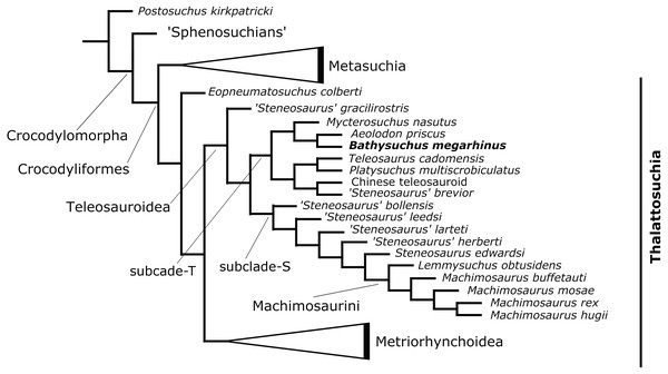 Results of the phylogenetic analysis.