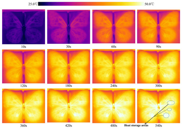 Real-time temperature on the wing surface during heat absorption by adult Tirumala limniace butterflies.