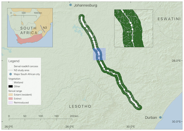 Map showing the location of the section of the N3 studied, serval roadkill carcass locations recorded from 2014 to 2017, and wetland within 10 km of the road.