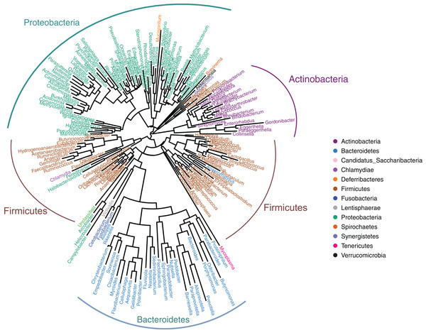 Genus-level phylogeny of gut microbiota from four snake species.