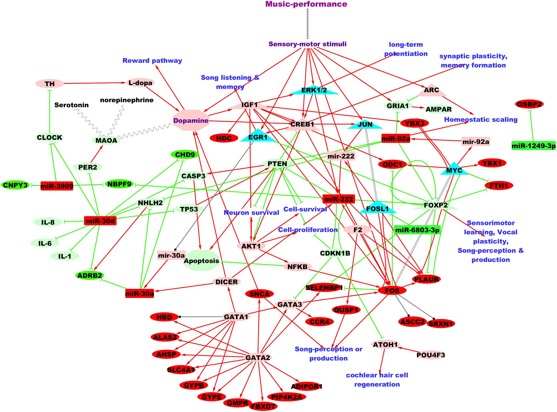 Music-performance regulates microRNAs in professional