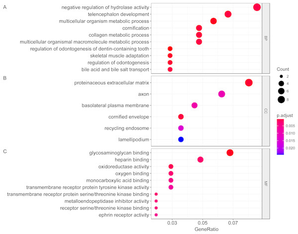 Gene ontology analysis of differentially expressed genes associated with response of esophageal squamous cell carcinomas to neoadjuvant chemoradiotherapy.